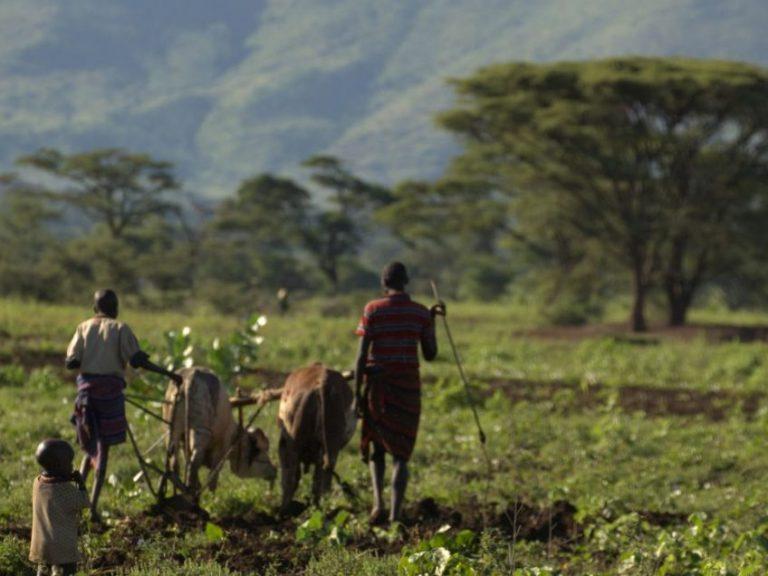 D2.Farmers NapakFields 6531 3