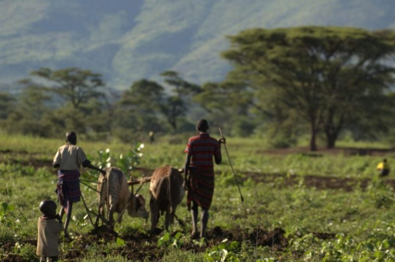 Agriculteurs travaillant sur les champs de Napak en Ouganda