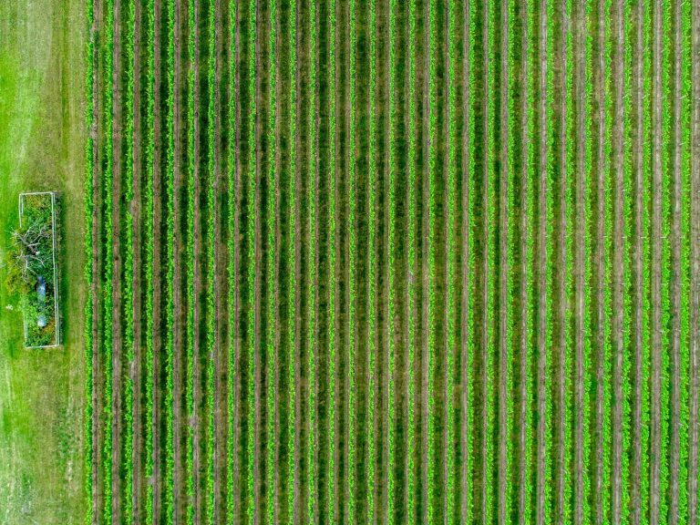 Bird's eyeview of a soybean field that the RHEA Group and DryGro collaboration is looking to replace using earth observation data to protect the environment