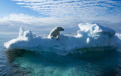 Polar bear on ice floe in sea